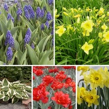 Image of Bulb & Perennial Collections