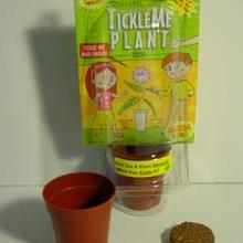 Image of TickleMe Plant Single Pot Kit