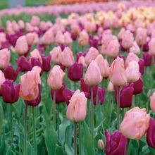 Image of Blend  Spring Sorbet